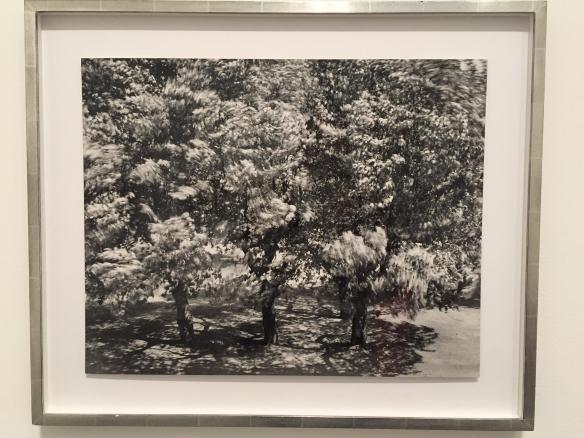 Otto Steinert Die Bäume vor meinem Fenster II, 1956. [The Trees in Front of my Window II, 1956]
